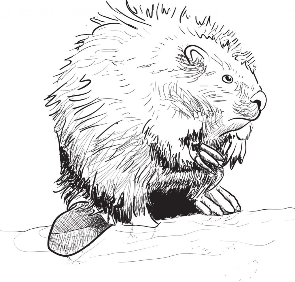 Beaver standing by water