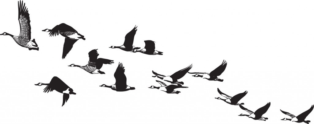 How To Draw Geese In Flight