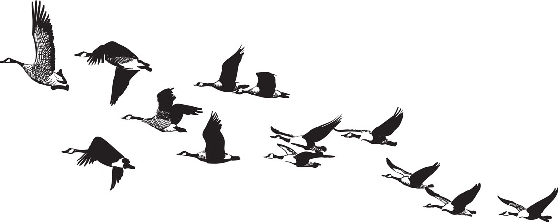 Geese Flying Drawing Published January 15 2012 at