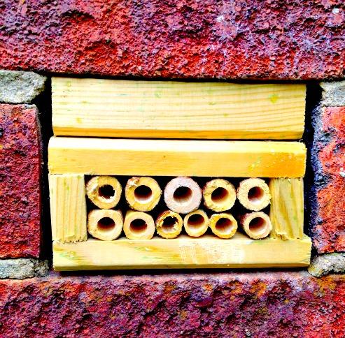 bug-house